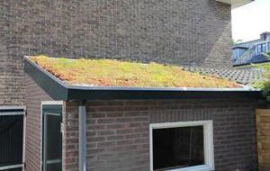 Groen dak met sedum op plat dak van uitbouw