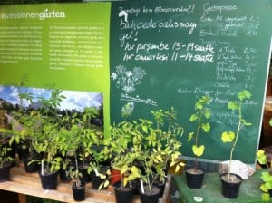 prinzessengarten - nomadisch groen - stadsboerderij in berlijn kreuzberg