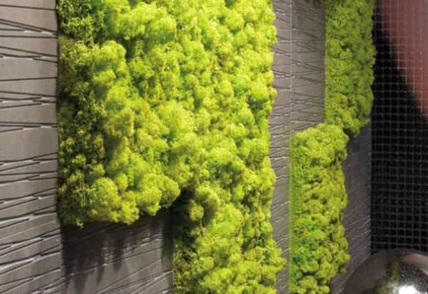 Nieuw Mos tegen de muur in de woonkamer | Tuin en Balkon NY-87