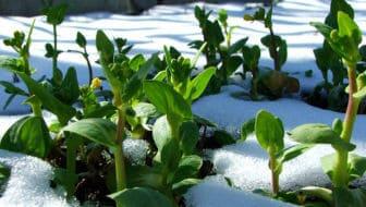 tuin of balkon in de winter - winterklaar maken