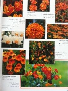 tuinplanten op kleur - 3