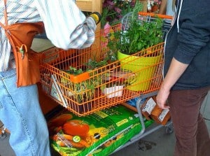 online planten kopen - planten in winkelwwagen