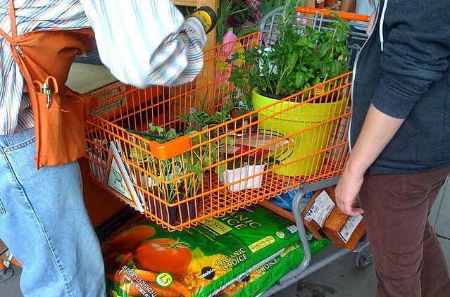 online planten kopen - planten in winkelwagen