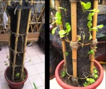 Verticale-tuin-plantenpot