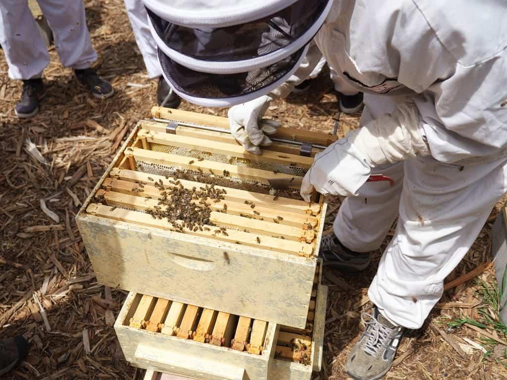 bijenkast inspecteren