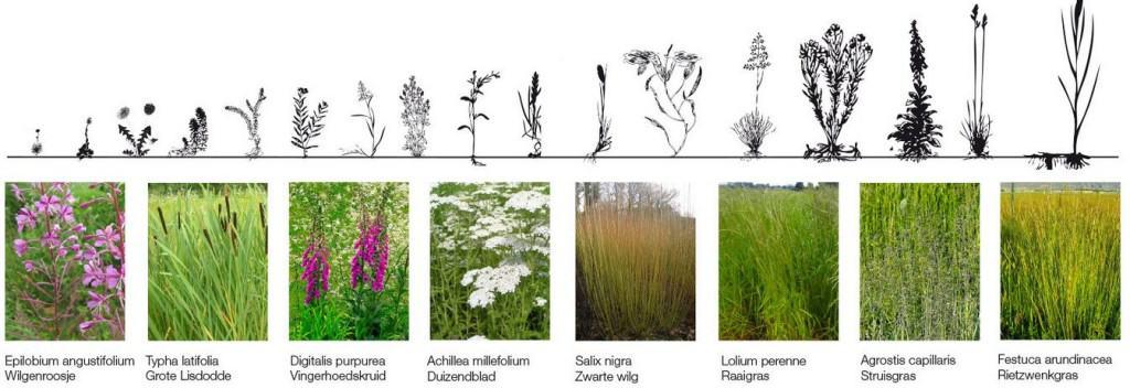 biologische bodemsanering met planten