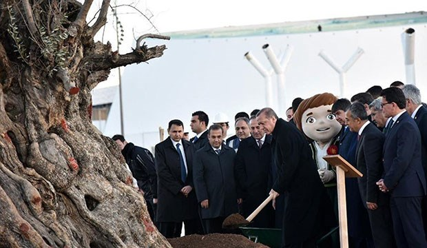 erdogan olijfboom
