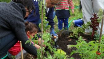buurttuin samen tuinieren