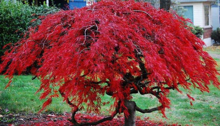 Bomen Voor In De Tuin.Een Boom Voor Elke Tuin Want Bomen Zijn Cool Tuin En Balkon