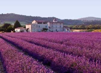Beste standplaats voor lavendel