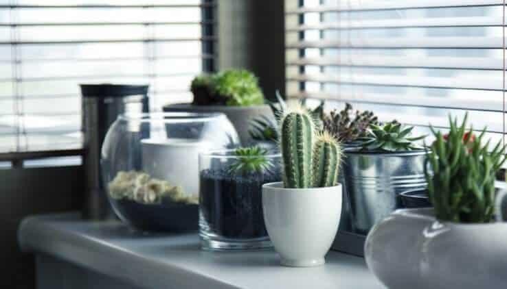 Potgrond Voor Cactussen.5 Fouten Die Je Maakt Met Je Vetplantjes En Hoe Je Ze In Leven