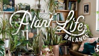 plant-life-balance