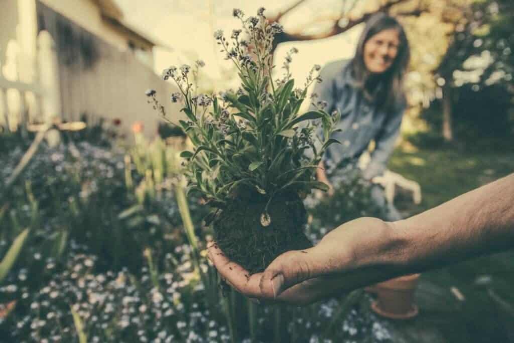Tuin Tegels Gratis.Twee Gratis Planten In Ruil Voor Een Tegel 23 Maart Tuin En Balkon