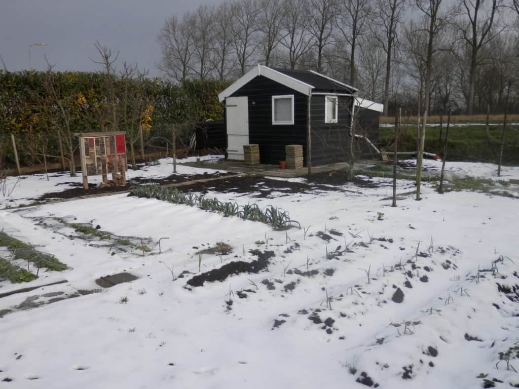 Mijn moestuin in de winter