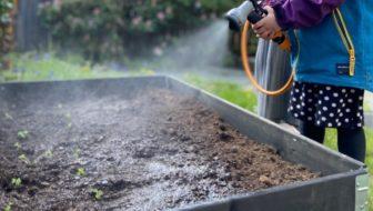 beste-tips-tegen-droogte-in-de-tuin