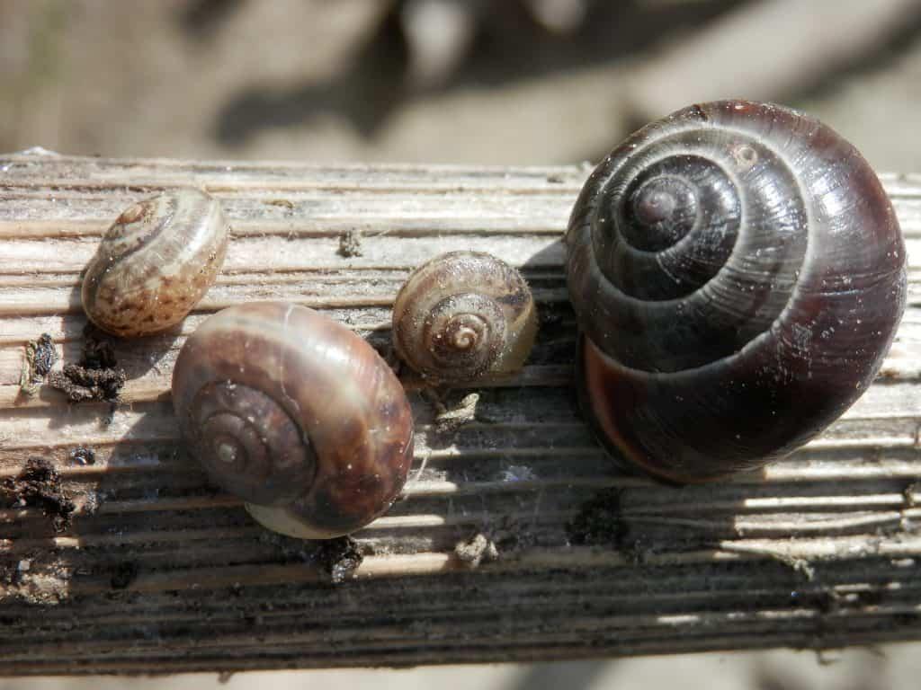 Slakken wegvangen